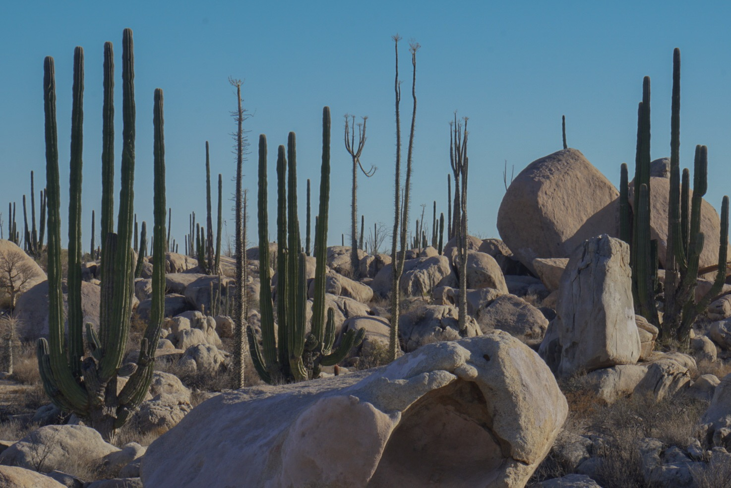 A distinctive biosphere in Baja